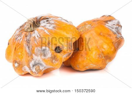 two spoiled bush pattypan with mold isolated on white background