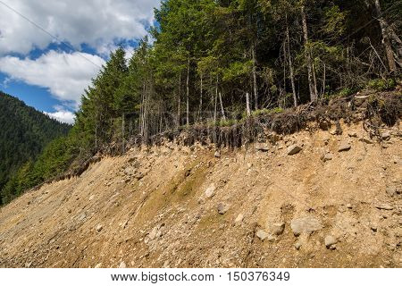 Forest On The Edge Of Collapse