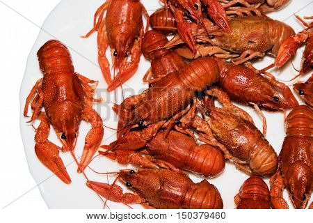 Boiled red crayfishes on a white dish. Brotherhood of red crawfish Boiled crawfish to beer, beer snacks, river crayfish