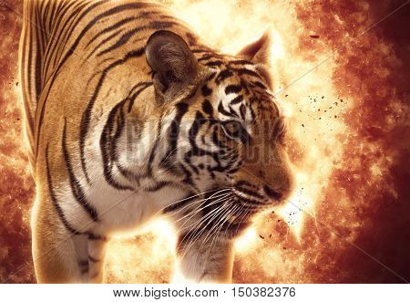 Blazzing tiger over black background