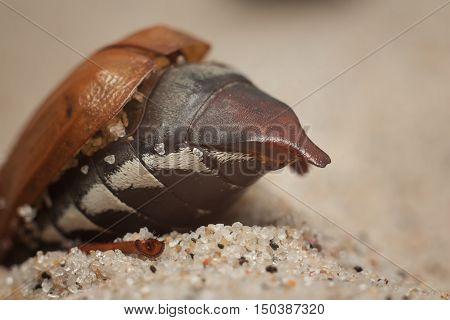 May Beetles Beach