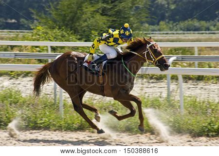 Horse race for the traditional prize Volgi in Pyatigorsk,the largest in Russia.