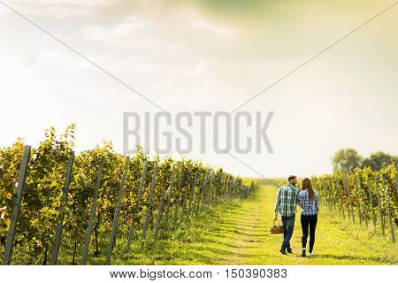 Couple of young winegrowers walking in vineyard