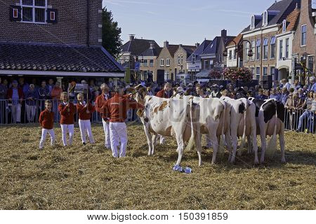 WORKUM, THE NETHERLANDS - SEPTEMBER 28, 2016: Impression of annual Kokedei, or dairy cattle show, held at last Wednesday of September, in centre of city of Workum.