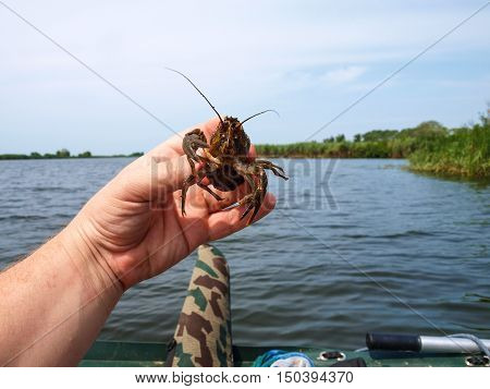 Inhabitant of freshwater crayfish trying to free himself from the tenacious fingers fisherman