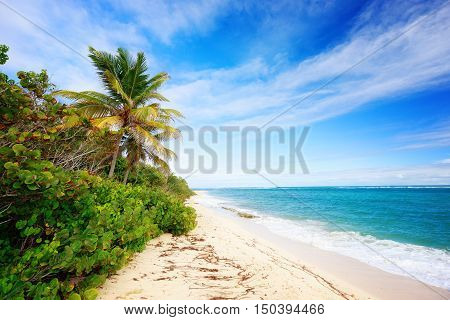 Exotic beach with palm trees in Caribbean. Cap Macre Beach in search of tranquility near Anse Michel Beach Cap Chevalier Martinique Caribbean