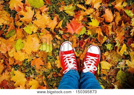 Conceptual hipster style image of legs in boots, trendy gumshoes on background of autumn leaves. Feet shoes walking in fall season  nature poster