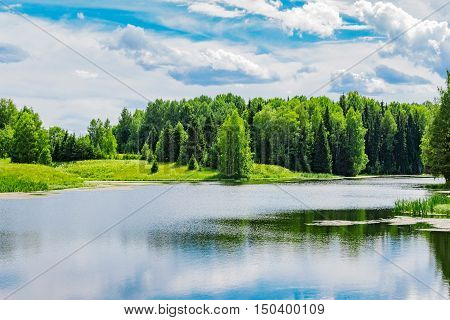 Pond and forest on the coast in summer day