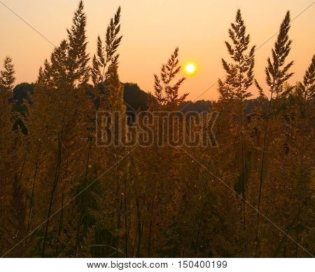 Autumn and Sunset / Hay and Tree