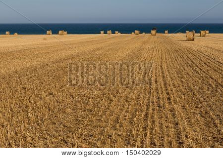 Rolling stacks of straw on mown field beneath a blue sky on sea coast