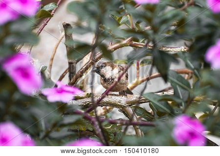 Brown bird among many branches and pink flowers looking suspicious.