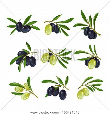 Set of green, yellow and raw, black and ripe olive branches logotypes with leaves on stem. Great logo for vegetable market advertisement and vegetarian organic nutrition banner, botany plant emblem
