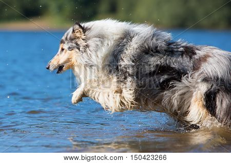 Dog Jumping In The Water