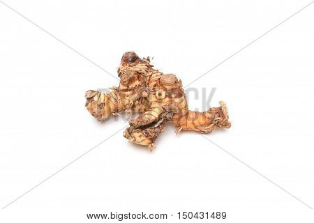 Galanga Greater Galangal False Galangal isolated on the white background. Scientific name Alpinia galanga