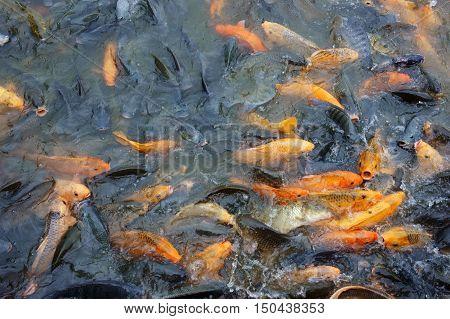Vietnam Fish Farming