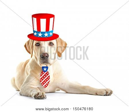 Cute dog with Uncle Sam hat and tie on white background. USA holiday concept.