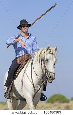 herdsman riding on his camargue for selecting the livestocks