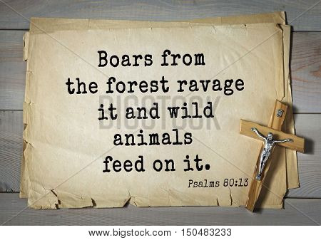TOP-1000.  Bible verses from Psalms. Boars from the forest ravage it and wild animals feed on it.