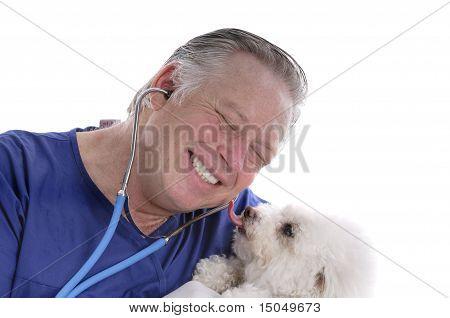 Bichon Frise Licking Happy Veterinarians Face
