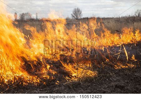 The big extensive fire in the field. Close up.