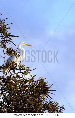 White Egret In Tree