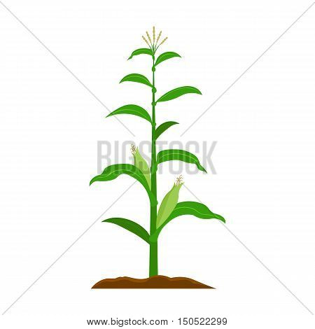 Corn icon cartoon. Single plant icon from the big farm, garden, agriculture collection.