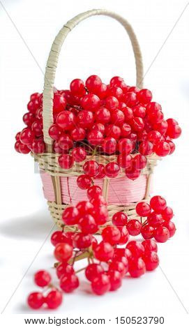 Red Berries Of Viburnum In Small Wicker Basket