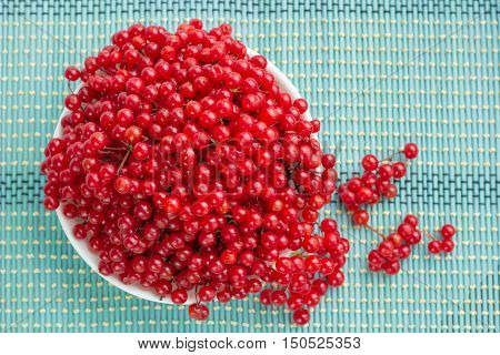 Red Viburnum Berries In White Plate On Blue Underlay