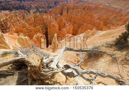 Needles in Bryce Canyon National Park, Utah, Usa.
