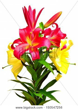 Bouquet of beautiful flowers lily isolated on white background