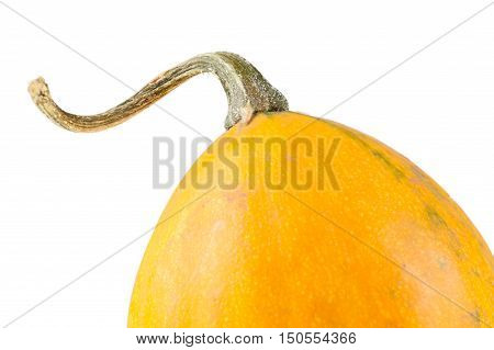 Fresh Organic Yellow Decorative Pumpkin