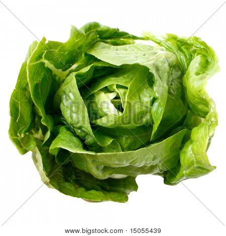 Romaine salad isolated on white