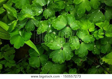 Green leaves covered with raindrops, nature background