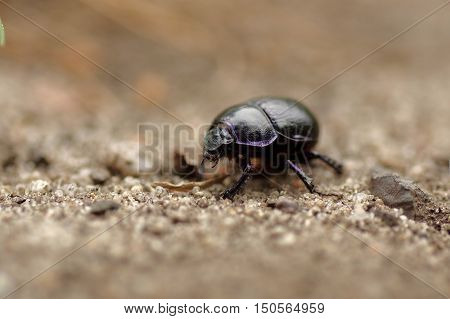 The photo shows beetle lout on a macro scale