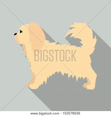 Pekingese raster illustration icon in flat design