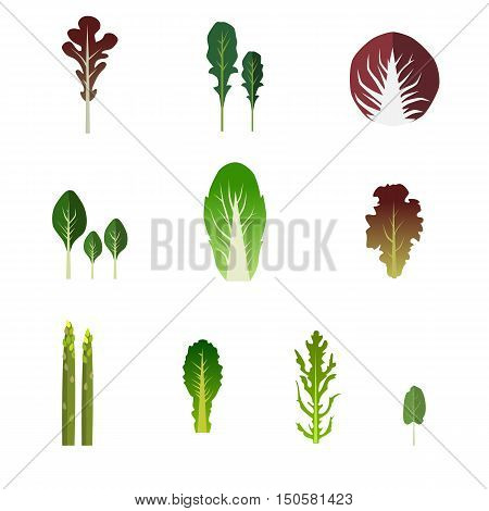 Set of salad bowl. Leafy vegetables green salad. Graphic illustration