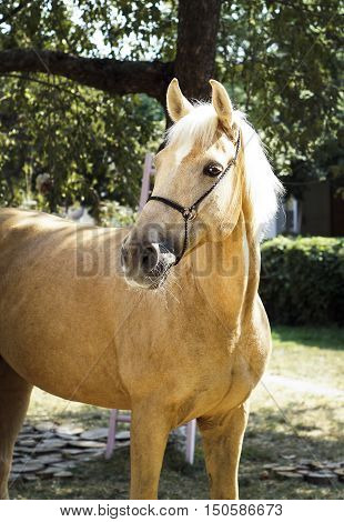 palomino horse with a white mane stands on a background of green leaves