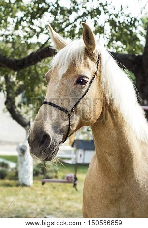 palomino horse with a white mane stands on a background of green leaves poster