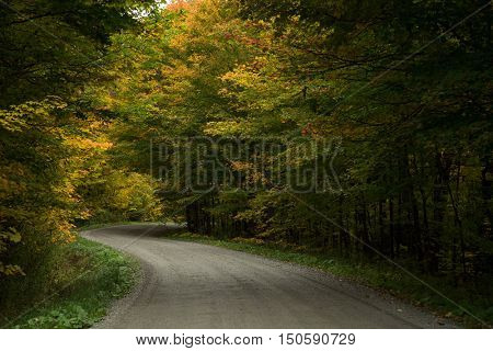 Gravel road during autumn season poster