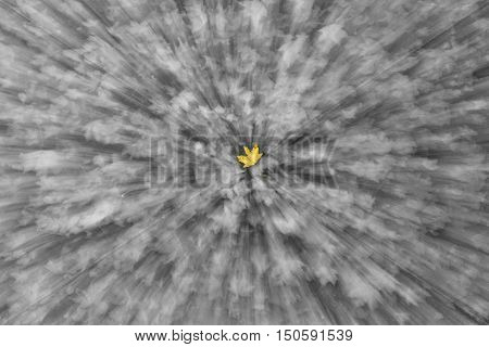 defoliation illustration of single leaf in focus decolorized, fall, one among strangers