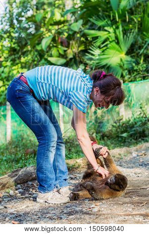 European Woman Playing With An Orphaned Young Monkey Ecuador South America