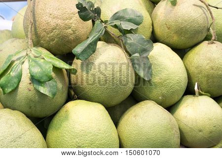 Group of fresh pomelo , Selection of fresh pomelo fruits
