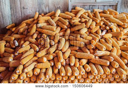 Corn on cob, pile of corn for animal feed, dried corn with rustic wooden background