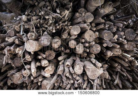 Twigs, tree brances, pile of wood, firewood