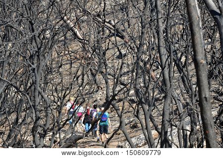 MT CARMEL ISRAEL - DECEMBER 25: Israeli travelers are traveling in the Caramel forests that just starts to recover after the Great Fire that burnt the reserve in the beginning of December.