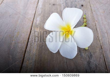 plumeria or frangipani flower vintage tone on wooden floor