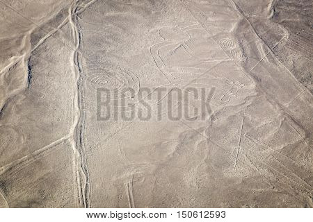 World famous Nazca lines from the Nazca overflight- Monkey