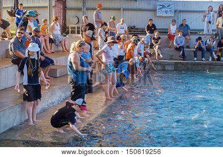Fish Feeding Darwin
