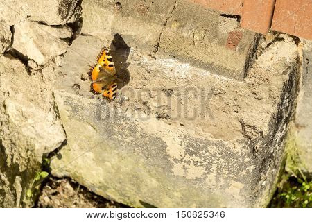 Orange Butterfly On Concrete