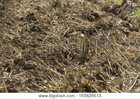 Close up of a dried and plowed field